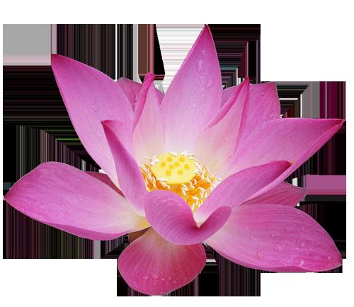 Lotus_Flower_Clipart